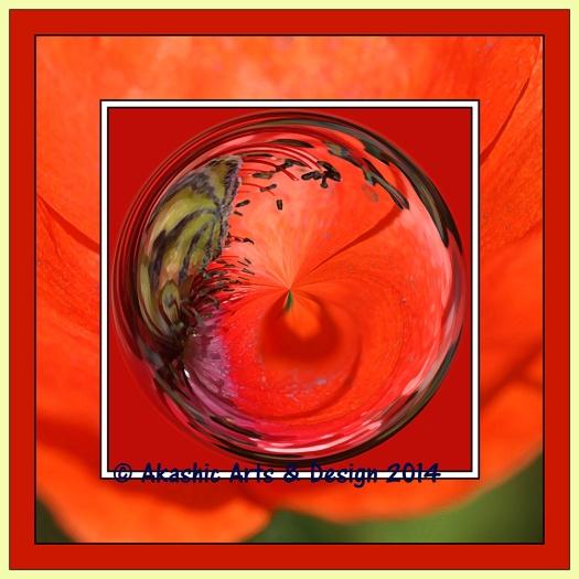 Poppy orbed