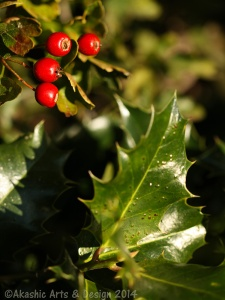 The holly...